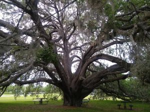 Homecare Orlando FL - Old and Gnarly Can Be So Beautiful!